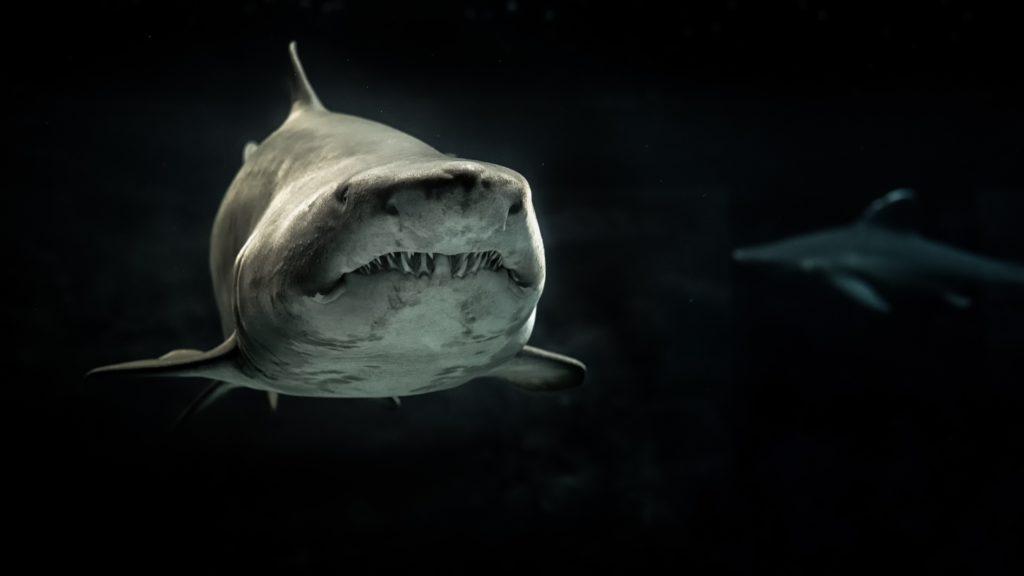 una avventura incredibile trovarsi davanti a uno squalo che ti guarda .