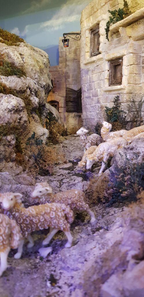 Presepio isola di Gozo particolari e pecorelle