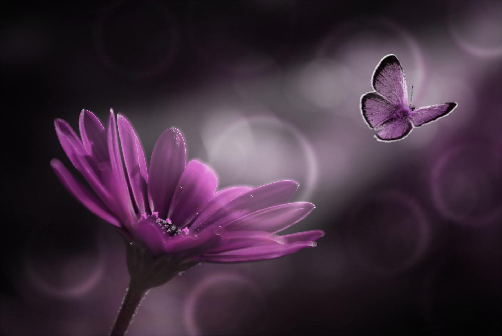 Come Creare Il Viola la farfalla viola: lo strano simbolo su alcune culle in