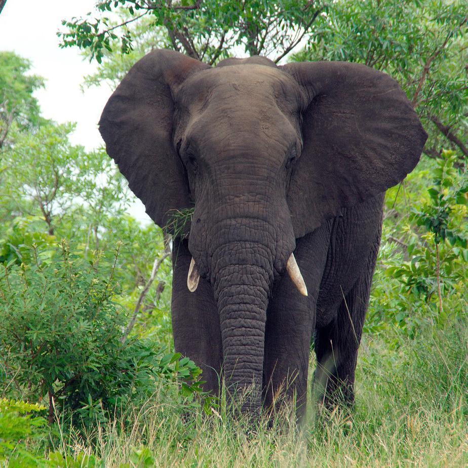elefante tra cespugli e fili d'erba, dietro ci sono alcuni alberi