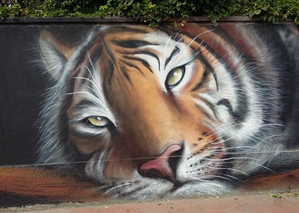 Muri Liberi street art- l testa di una tigre disegnata su un muro - Opera di Acme 107