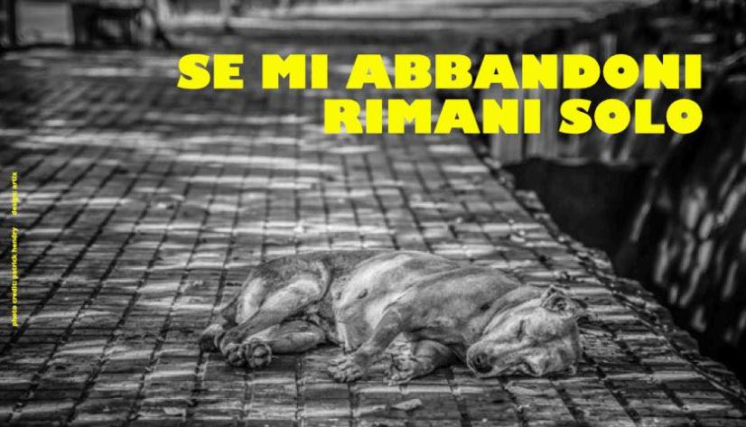 La foto in bianco e nero della campagna promozionale, con un cane sdraiato su una strada ciottolata e la scritta in giallo sulla destra