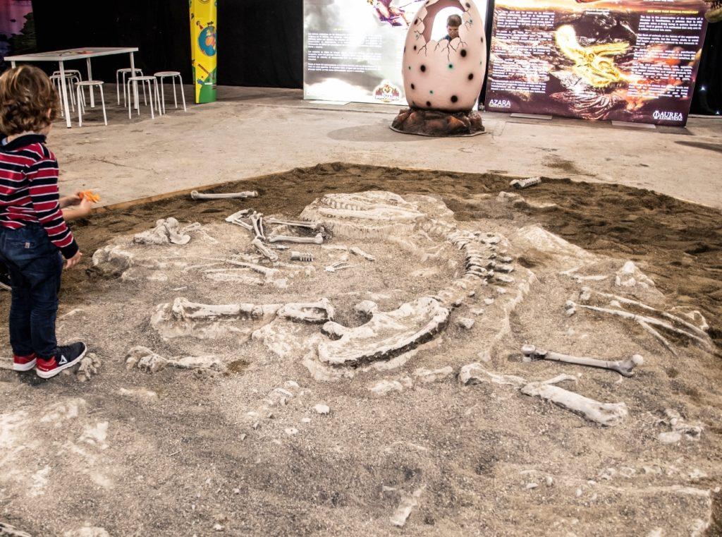 una conca di terra e sabbia cda cui affiorano i resti di un fossile di dinosauro