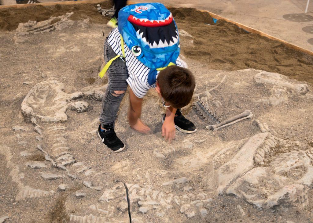 t-rex a Torino. Nella foto un bqambino con uno zaino blu sulla schiena è chinato nell'intento di disseppellire dei resti di fossili in una conca di terra e sabbia